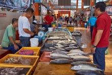 fish and more fish