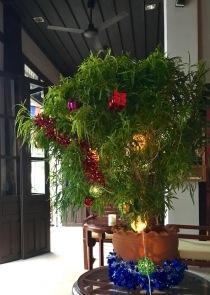 The weed Christmas tree