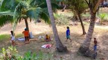 Coconuts galore