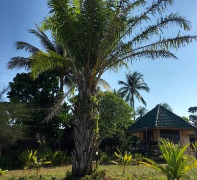Yataa Resort - The house