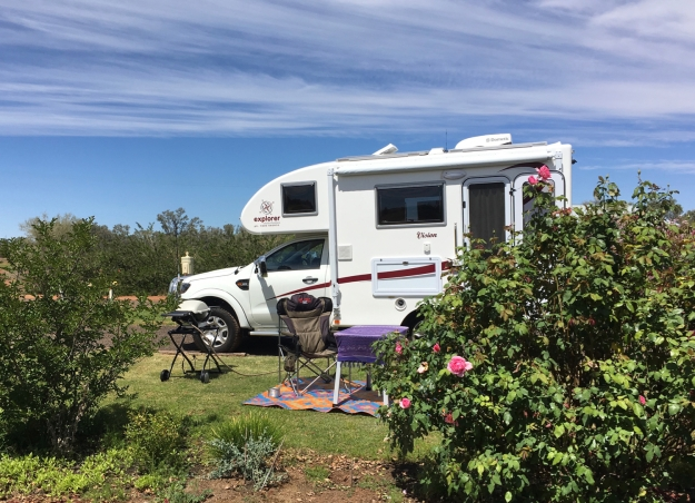 camping amongst the roses