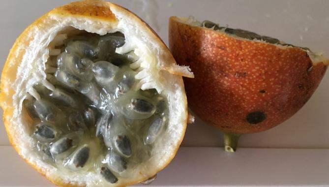 Markisa — Passion Fruit