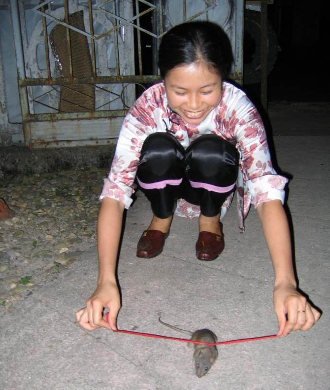 it's a rat 2